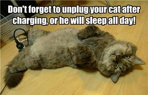 Don't forget to unplug your cat after charging, or he will sleep all day!