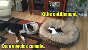 Kittie entitlement..