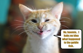 Denial.. all kitties employ it..