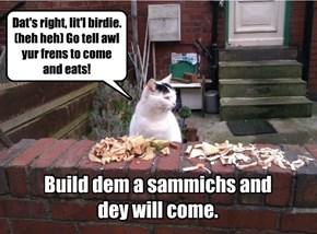 Building a better bird-trap!