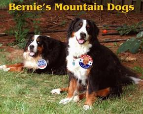 Bernie's Mountain Dogs