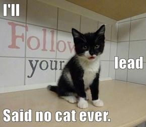 I'll lead Said no cat ever.