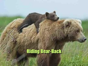 Riding Bear-Back