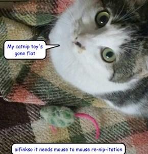 My catnip toy's gone flat