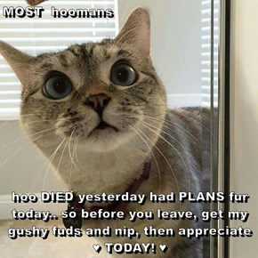 MOST  hoomans  hoo DIED yesterday had PLANS fur today.. so before you leave, get my gushy fuds and nip, then appreciate  ♥ TODAY! ♥