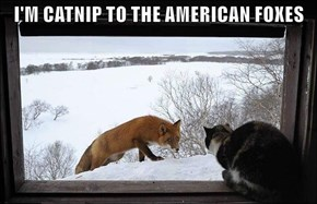 I'M CATNIP TO THE AMERICAN FOXES