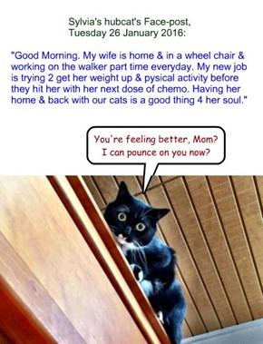 Sylvia's hubcat's Face-post, Tuesday 26 January 2016