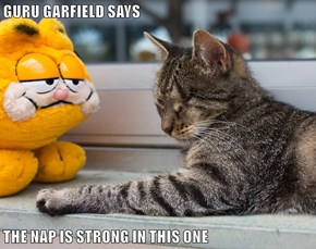 GURU GARFIELD SAYS  THE NAP IS STRONG IN THIS ONE