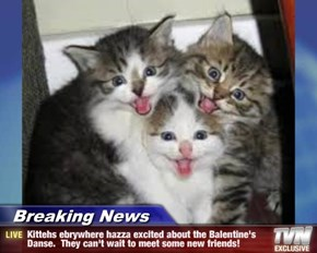 Breaking News - Kittehs ebrywhere hazza excited about the Balentine's Danse.  They can't wait to meet some new friends!