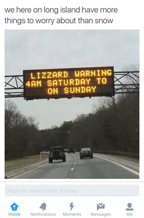 That's A Punctual Lizard