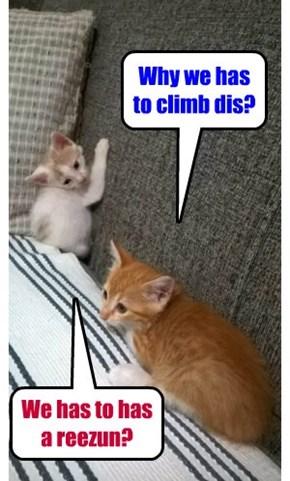 We climb becoz we can!