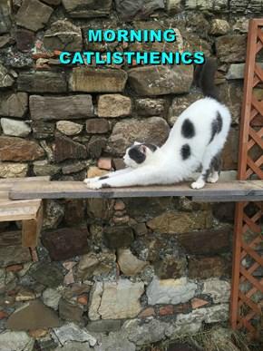 MORNING                                                                             CATLISTHENICS