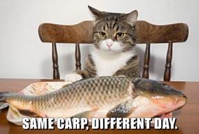SAME CARP, DIFFERENT DAY.