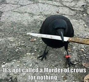 It's not called a Murder of crows for nothing...