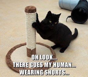 OH LOOK...                                           THERE GOES MY HUMAN...                     WEARING SHORTS...