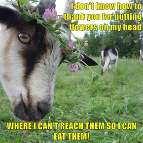 I don't know how to                                    thank you for putting                                    flowers on my head  WHERE I CAN'T REACH THEM SO I CAN EAT THEM!