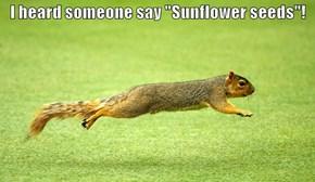 "I heard someone say ""Sunflower seeds""!"