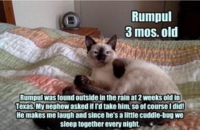 Allcats' Kitteh Rumpul
