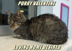 PURRY VALENTINE   LOVING HOME DESIRED