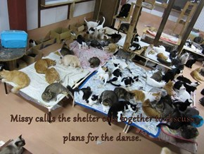 Missy callls the shelter cats together to discuss plans for the danse.