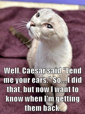 "Well, Caesar said ""Lend me your ears."" So....I did that, but now I want to know when I'm getting them back."