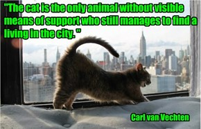 """The cat is the only animal without visible means of support who still manages to find a living in the city. """