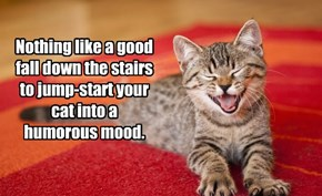 Keep your cat happy!