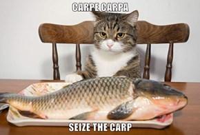 CARPE CARPA  SEIZE THE CARP
