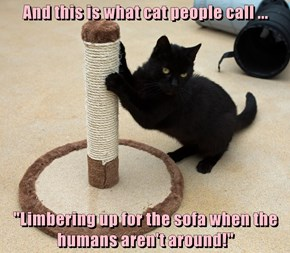 """And this is what cat people call ...  """"Limbering up for the sofa when the humans aren't around!"""""""
