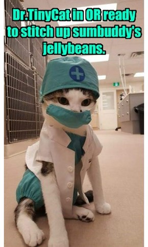 Paging Dr.TinyCat to da OR!