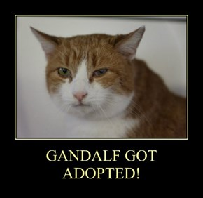 GANDALF GOT ADOPTED!