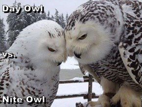 Day Owl vs. Nite Owl