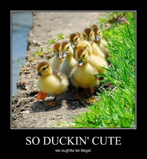 SO DUCKIN' CUTE