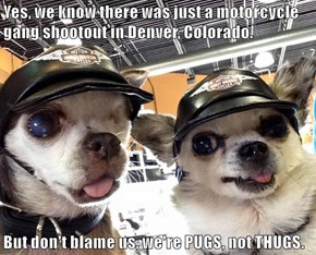 Yes, we know there was just a motorcycle gang shootout in Denver, Colorado.  But don't blame us, we're PUGS, not THUGS.