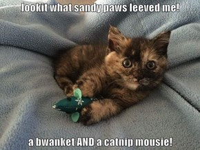 lookit what sandy paws leeved me!  a bwanket AND a catnip mousie!