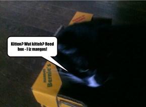 Kitten? Wut kitteh? Reed box - I iz mangos!