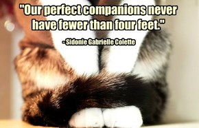 """Our perfect companions never have fewer than four feet."""