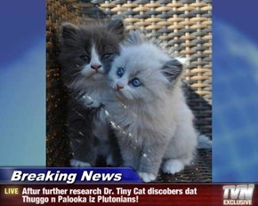 Breaking News - Aftur further research Dr. Tiny Cat discobers dat Thuggo n Palooka iz Plutonians!