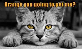 Orange you going to pet me?