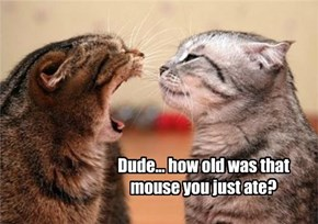 Dude... how old was that mouse you just ate?