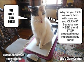 We need our toes - NO declawing!