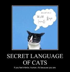 SECRET LANGUAGE OF CATS