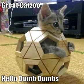 Great Catzoo  Hello Dumb Dumbs
