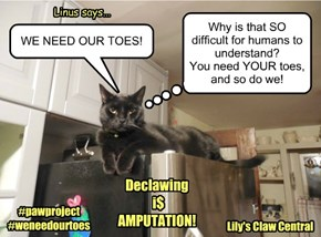 Say NO to DECLAWING!