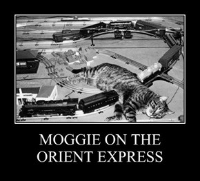 MOGGIE ON THE ORIENT EXPRESS