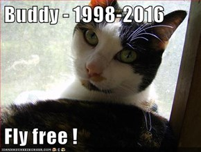 Buddy - 1998-2016  Fly free !
