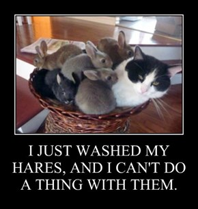 I JUST WASHED MY HARES, AND I CAN'T DO A THING WITH THEM.