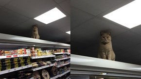 This Badass Cat Is Taking Over a British Supermarket & Not Having Your Sass