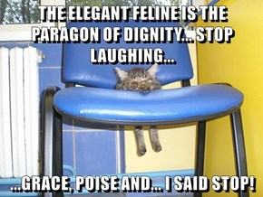 THE ELEGANT FELINE IS THE PARAGON OF DIGNITY... STOP LAUGHING...  ...GRACE, POISE AND... I SAID STOP!