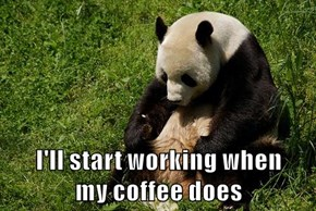 I'll start working when                      my coffee does